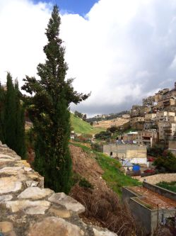View from King David's palace. © 2010 Charles E. McCracken archives