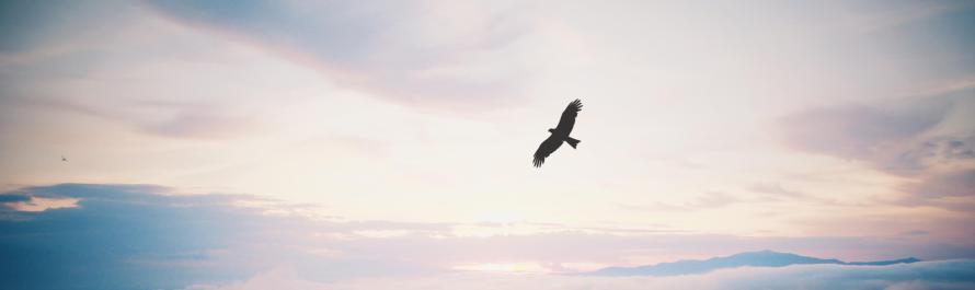 Isaiah 41.31_Hope in Adonai_banner_OTA