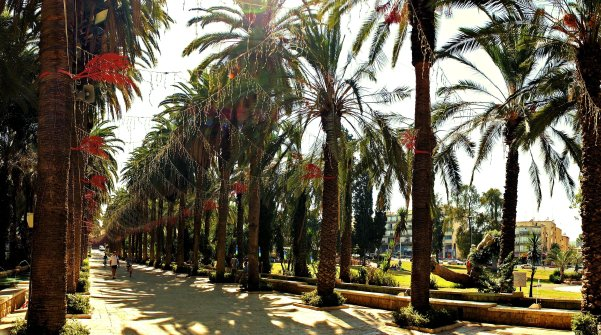 Palm Tree Boulevard in Gan HaMoshava, Israel.