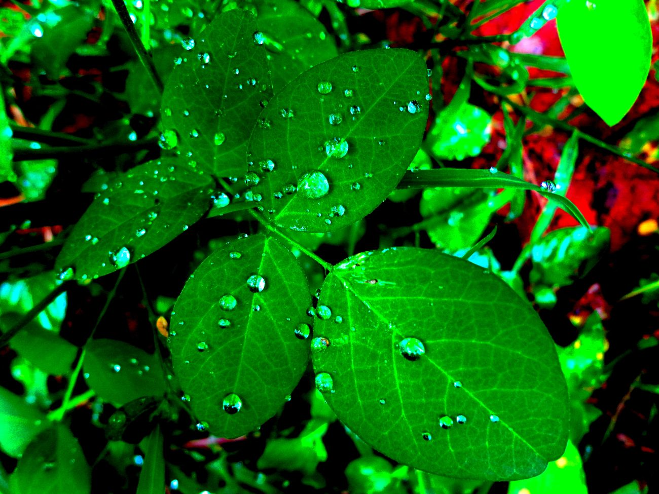 rain_drops_on_leaves_t