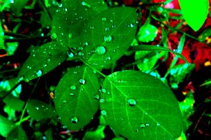 Like rain, rehearsing God's faithfulness refreshes the body, soul and spirit.