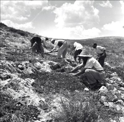 Planting of the Gilboa Mountains (circa. 1960).