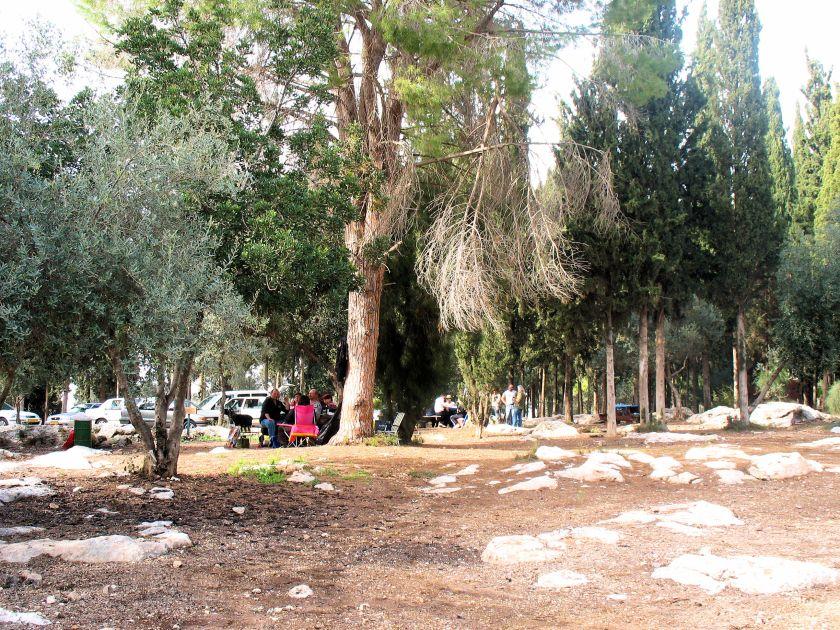 Yaar Hulda: View of Hulda Forest, Israel.