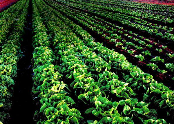Plant Good Seed_blank