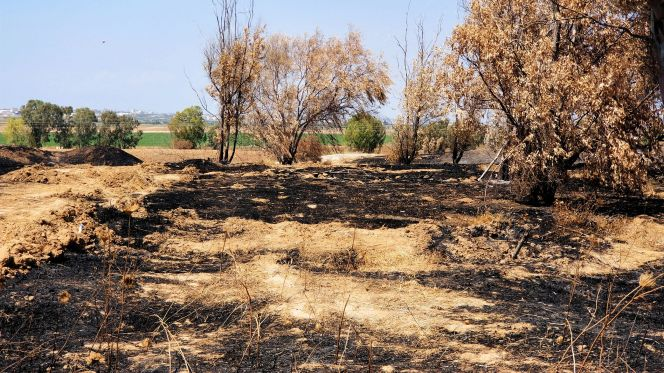2Orchards burned by incendiary kites, 2018.