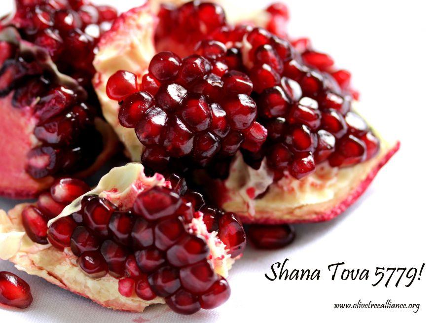 5779 Shana Tova Pomegranate_www.olivetreealliance.org