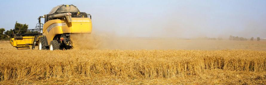 2_Israel Wheat Field_banner