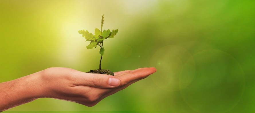 OTA Plant a Tree in Israel_1a